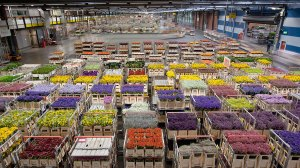 AIRPLANES_Amsterdam_Flower_Warehouse_Carts_4